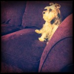 Maisy on the couch